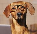 Thumb dog2
